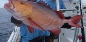 Fishing near Situ Island Resort Mozambique (15)